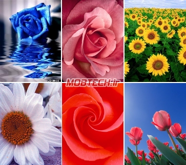 مجموعه ای از تصاویر گل های زیبا برای موبایل شما